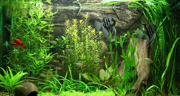 Akvárium je velkým zdrojem vlhkosti v bytě